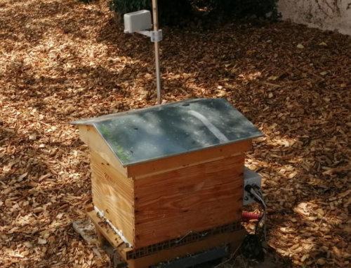 Reportage : Les ruches API-Smart sur le terrain !
