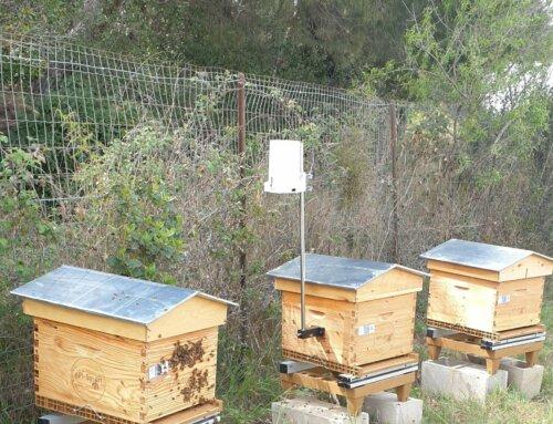 API-Smart, les ruches connectées au service de l'environnement